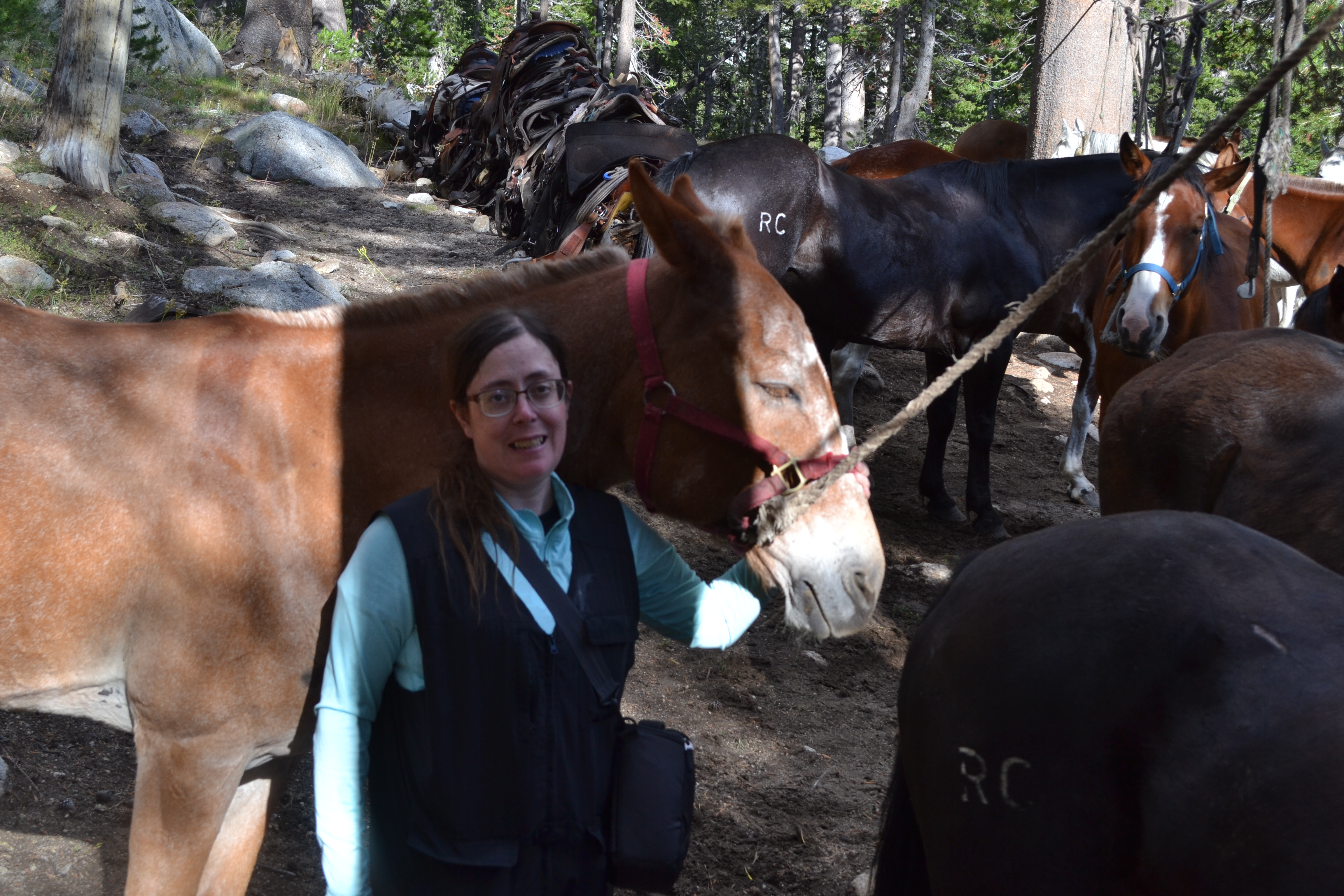 Author with mule
