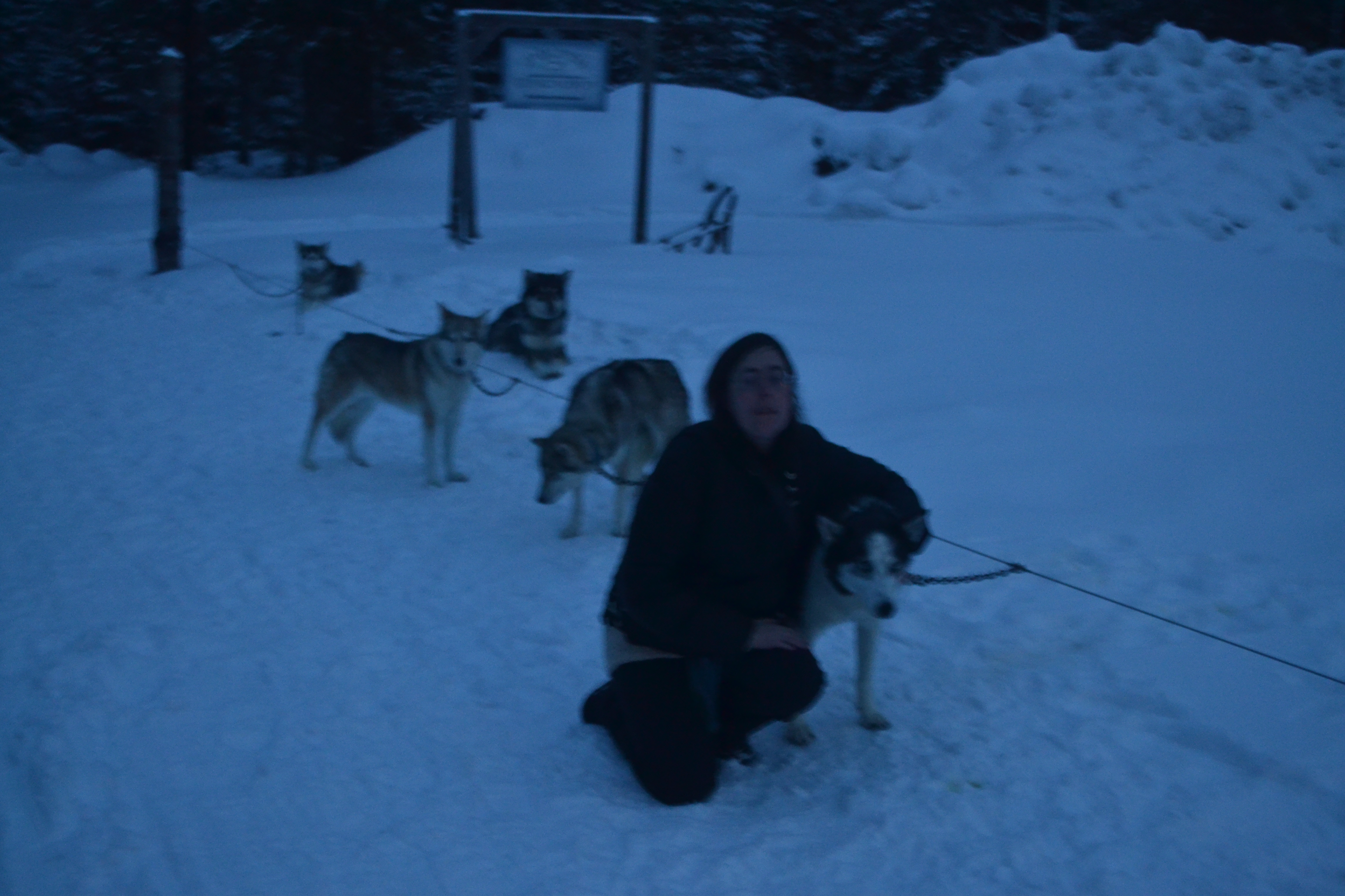 Author with sled dogs